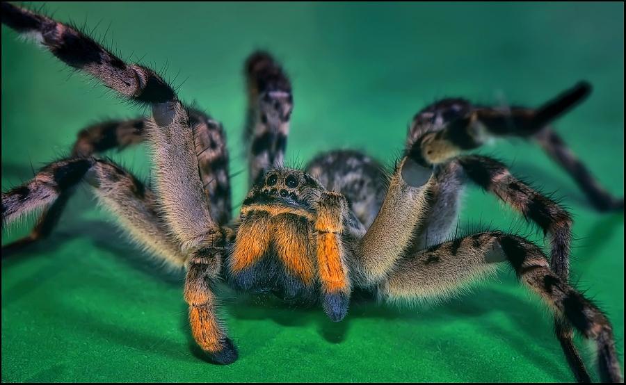 Ученые удивились брачным играм пауков