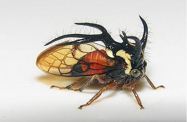 10 Горбатки: откуда у жуков рога растут