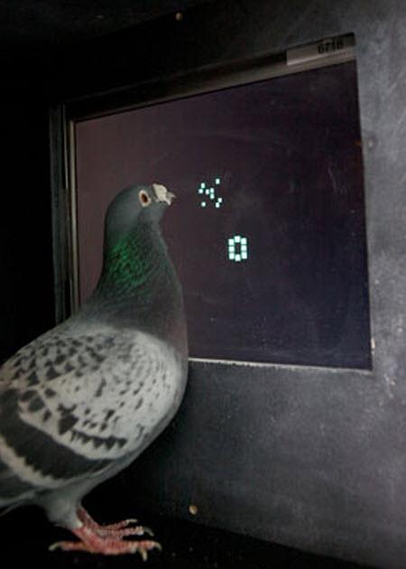 1032 Абстрактная арифметика не чужда голубям
