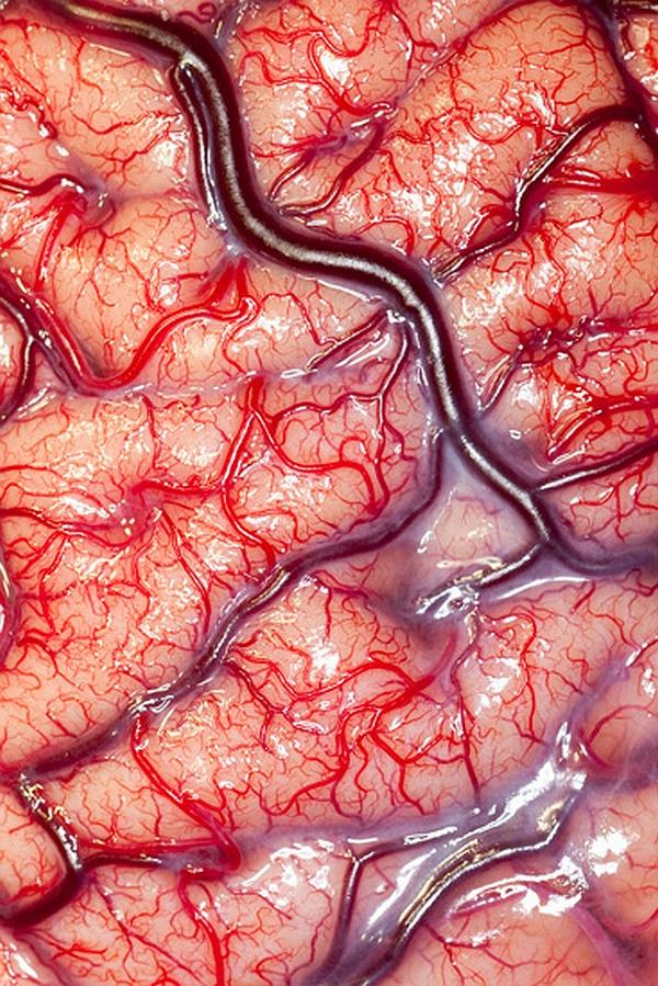 1107 Лучшие биомедицинские фото