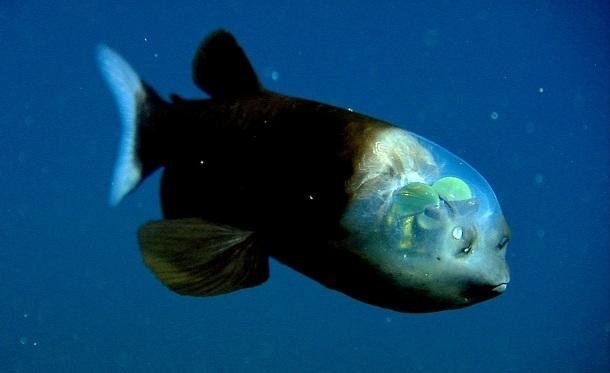 11100 Ученые нашли в Атлантическом океане неизвестных науке морских существ