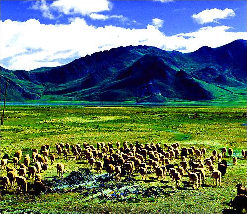 1133 Принцип овечьего стада: в основе - эгоизм