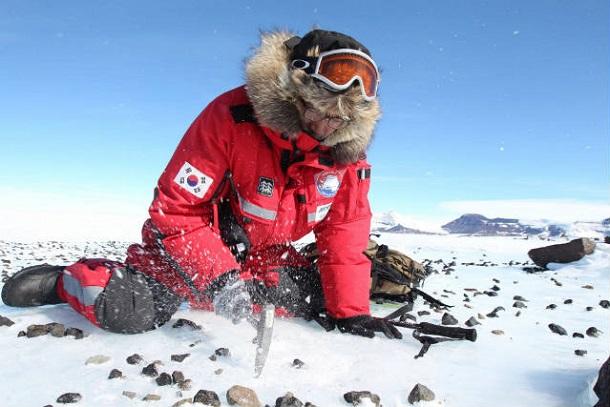 11610 В Антарктиде нашли след упавшего 10 лет назад метеорита