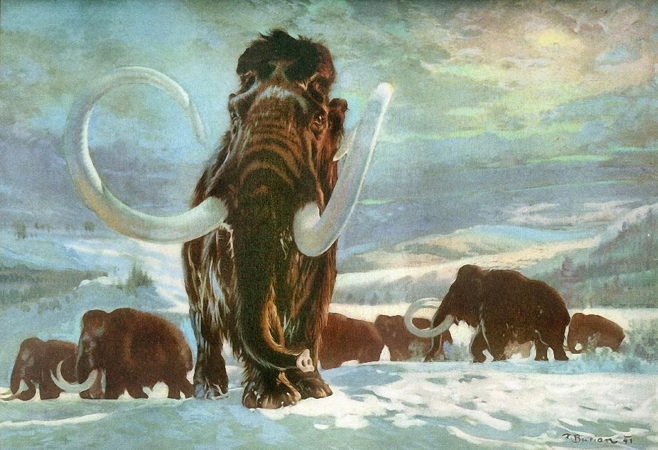1166 Ученым удалось найти живые клетки мамонтов