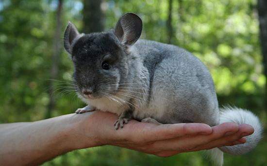 1167 Психологи определили, какие животные лучше всего влияют на ребенка