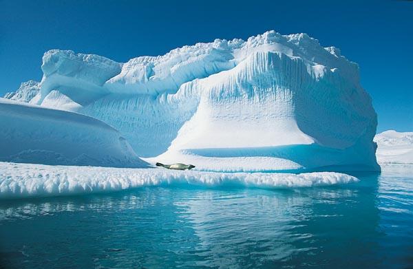 1169 Арктике пророчат быструю смерть