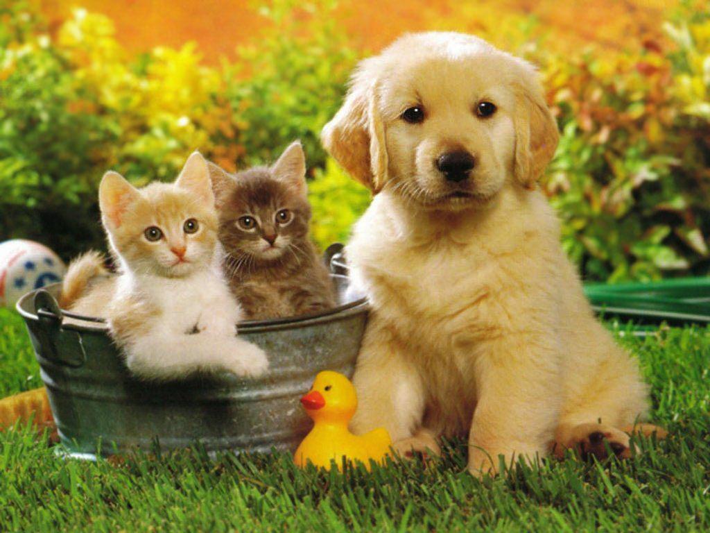1186 Фотографии собак и кошек помогают в работе