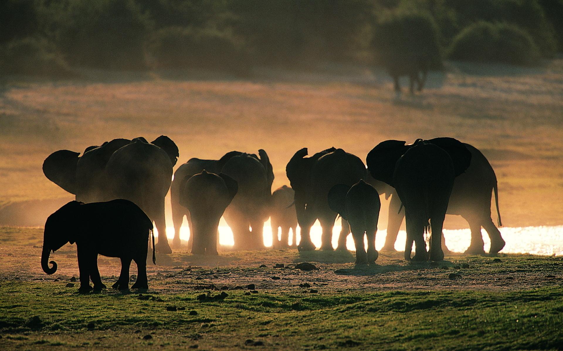 1187 Слоны у водопоя... советуются