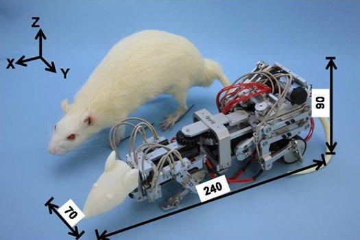 Японские ученые вводят крыс в депрессию с помощью робота