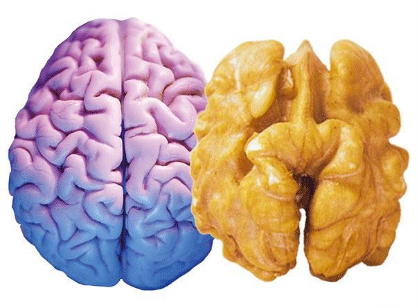 1232 Защитить мозг от старения помогут орехи