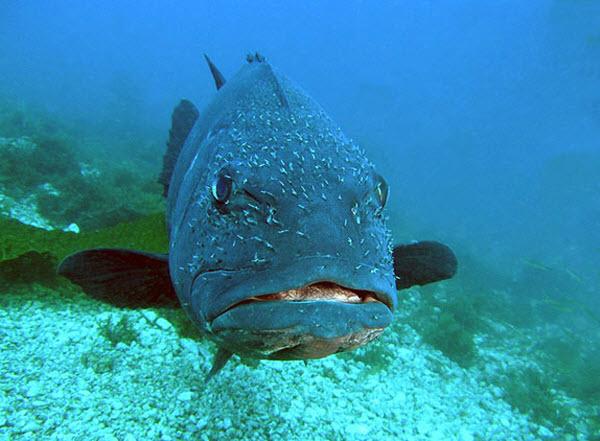 130 Ученые подозревают, что температура влияет на половую принадлежность рыб