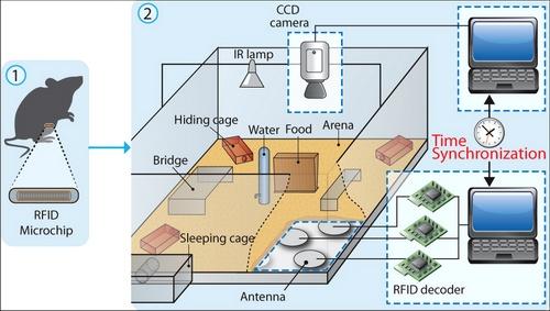 Схема мышиных аппартаментов