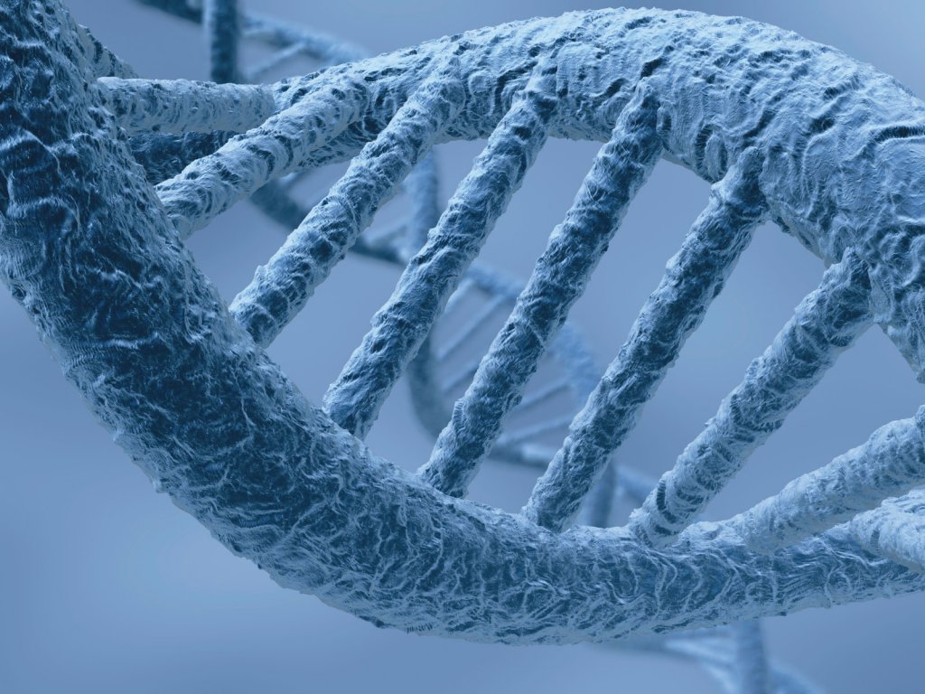 1334259531_vsemu-vinoy-geny Найден ген, ответственный за восстановление тканей