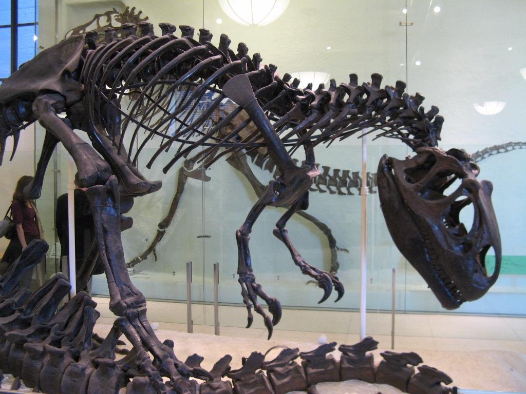 1356677619_nyc-145 Создана реконструкция мозга динозавра