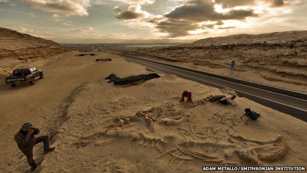1360875 Ученые определили откуда в чилийской пустыне взялись окаменелости китов