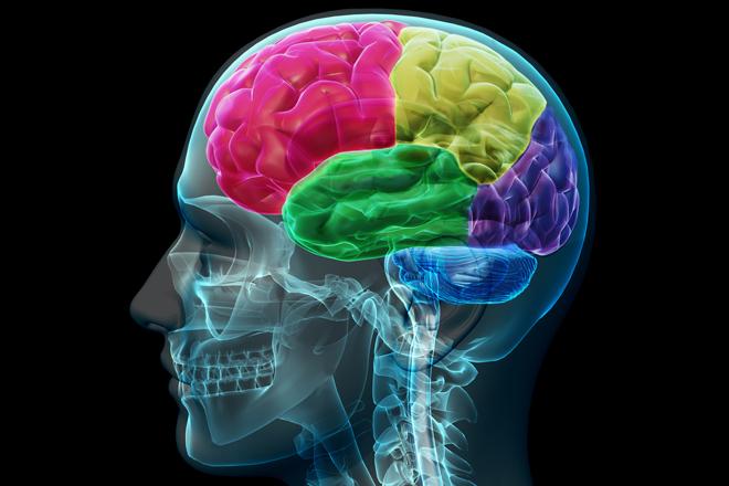 Нейропластичность - свойство человеческого мозга, заключающееся в возможности изменяться под действием опыта