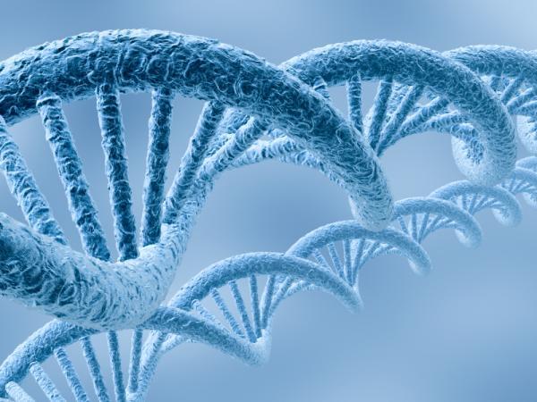 169 Ученые пытаются объяснить культурные различия генами