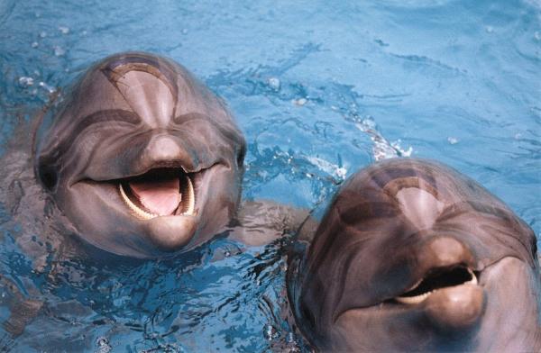 17 Общаться с дельфинами можно будет через переводчик