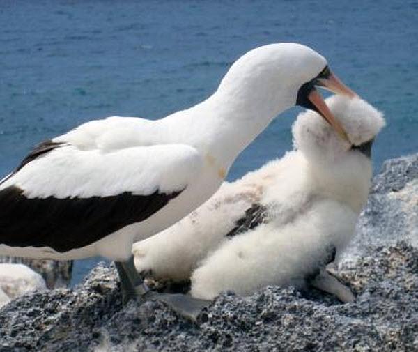 175 Ученые открыли у птиц склонность к дедовщине