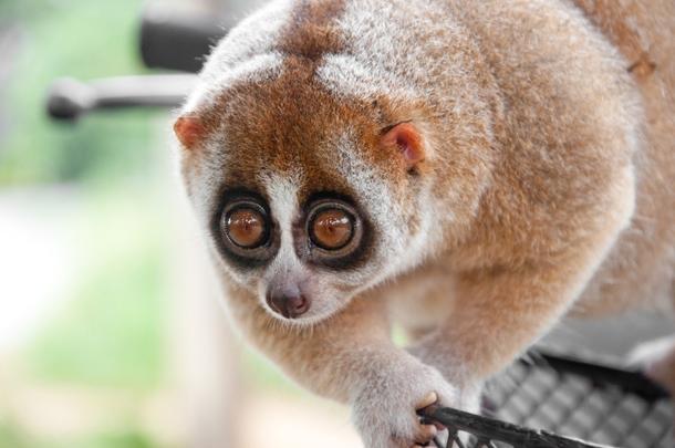 201313091252056658 В ближайшем будущем на Земле могут исчезнуть 75% видов животных