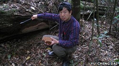 210 Самый большой в мире гриб нашли в Китае