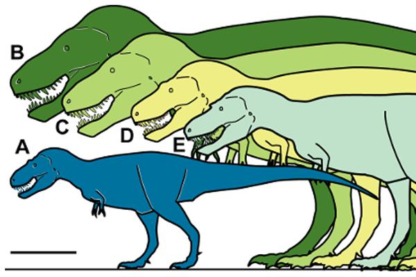 213 В Арктике нашли фрагменты карликового тираннозавра