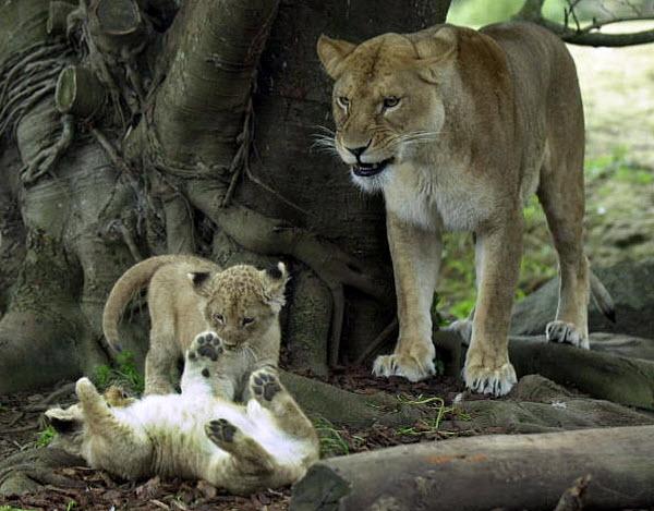 22 Самые жестокие матери в мире животных