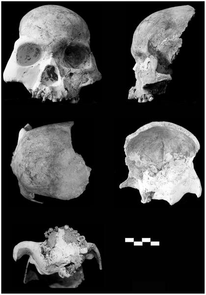 22 Найдены останки загадочного предка человека