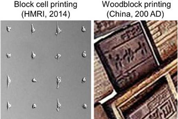 2221 Ученые научились делать гравюры из живых клеток