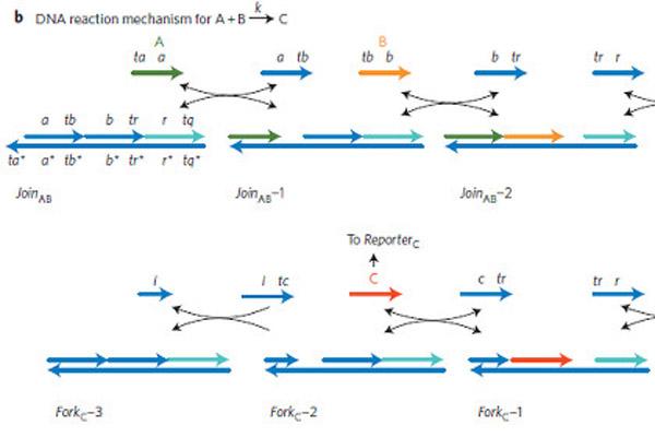 239 На основе ДНК сделали программируемые контроллеры