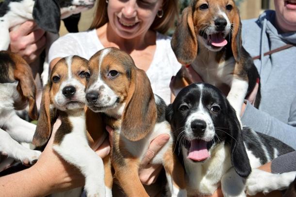 24124962 В США показали первых в мире щенков из пробирки