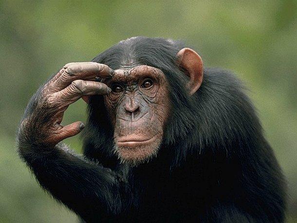 24920_original Китайские ученые успешно пересадили голову обезьяне