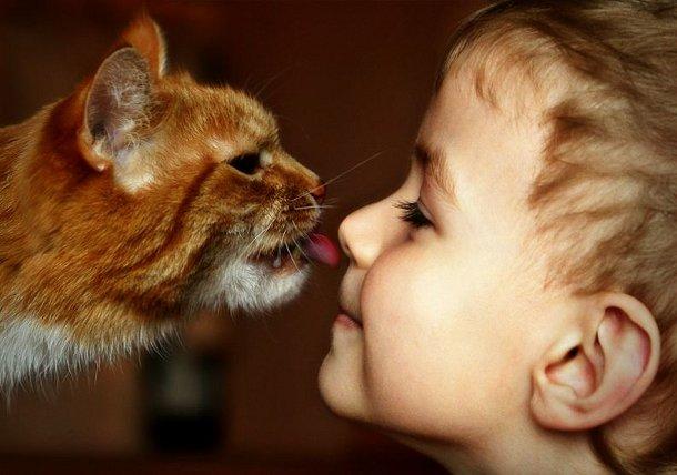 276 Кошки могут снижать умственные способности школьников