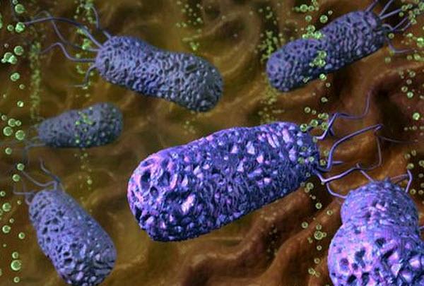 302 Бактерии защитят от астмы