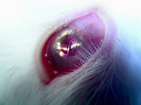 343 Изобретена эффективная контактная линза-дисплей