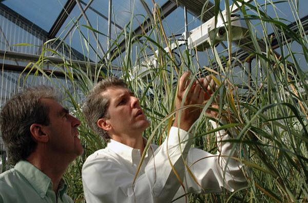 372 Биотопливом можно удовлетворить лишь пятую часть мировых энергетических потребностей