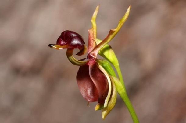 378 Самые необычные цветы в мире