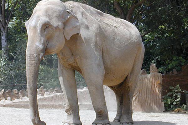 381 Индийских слонов тоже посещает вдохновение