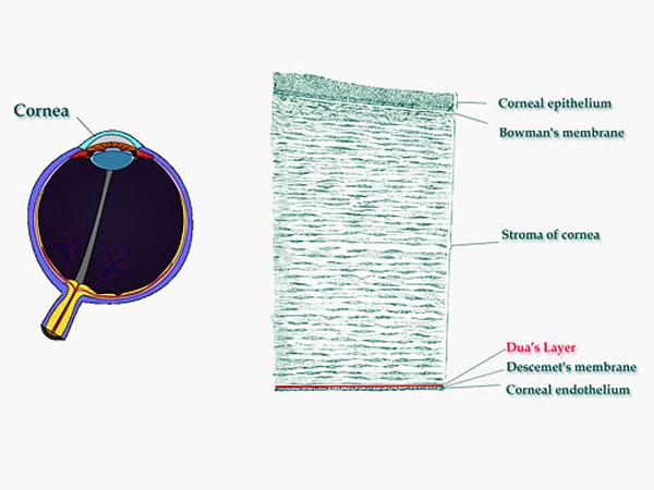 383 Учёные обнаружили внутри человеческого глаза новый слой