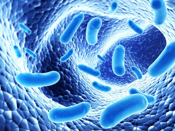 Корейцы при помощи бактерий получили бензин