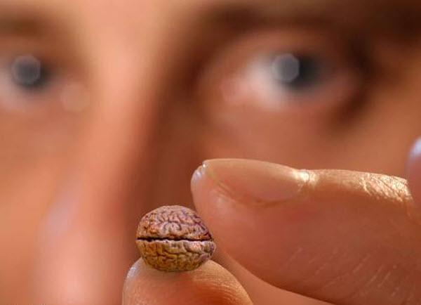 41 Ученые утверждают, что человечество поумнело до предела