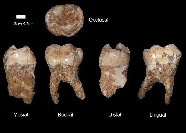 4459cffd11f62176819f01ffcd4ce2e8 По зубному камню древних людей ученые определили, как жили и чем питались наши предки 400 000 лет назад