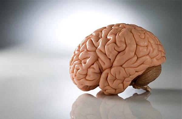 48 Ученые принялись за исследование фоновых мозговых процессов