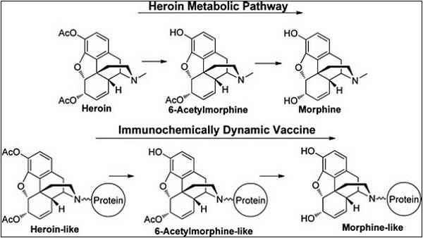 55 От героиновой наркозависимости можно будет сделать прививку?