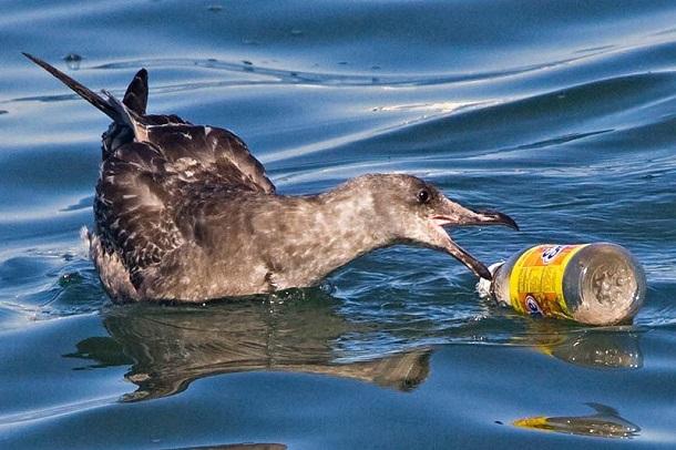 5_9 В мировом океане плавает почти 270 тысяч тонн пластикового мусора
