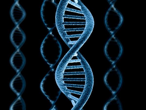 741 Условия, в которых рос человек, фиксируются на уровне ДНК