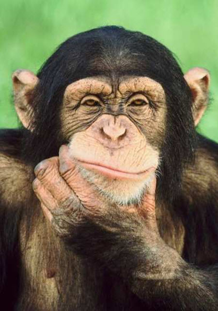 84 В эксперименте с законом Архимеда дети проиграли шимпанзе