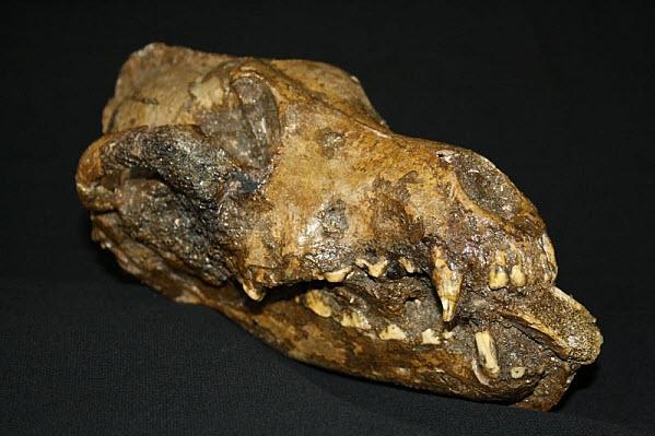 851 ТОП-5 интересных археологических открытий 2011 года