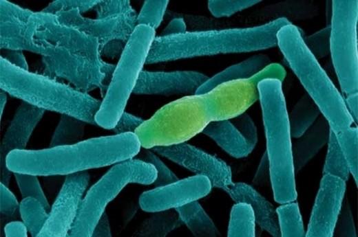 9542 ФБР расследует возможное заражение 75 ученых вирусом сибирской язвы