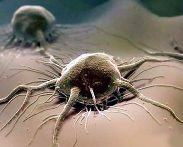article3604 Японскими учеными создана первая в мире раковая стволовая клетка
